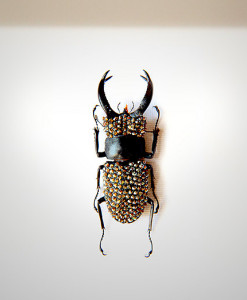 005_Beetle_HeadEnd_Pewter_full