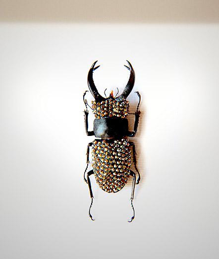 005_Beetle_HeadEnd_Pewter_full