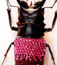 007_Beetle_End_PinkBurgundyclose