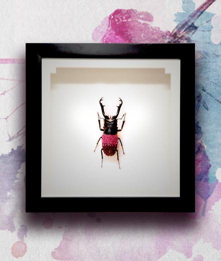 007_Beetle_End_PinkBurgundyfeaured