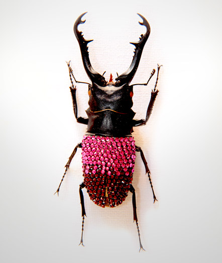 007_Beetle_End_PinkBurgundyfull
