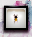 008_Beetle_Citrine_featured
