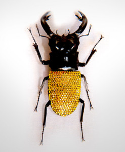 008_Beetle_Citrine_full