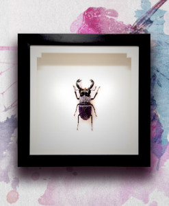 009_Beetle_MidEnd_LavenderPurpleVelvet_featured