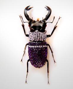 009_Beetle_MidEnd_LavenderPurpleVelvet_full