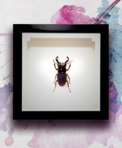 010_Beetle_End_PurpleVelvet_featured