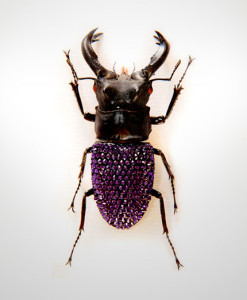 010_Beetle_End_PurpleVelvet_full