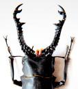 011_Beetle_Horns_Jet_close