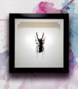 011_Beetle_Horns_Jet_featured