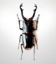 011_Beetle_Horns_Jet_full