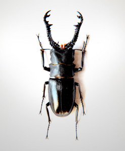 011_Beetle_Horns_Jet_full