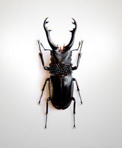 012_Beetle_Mid_Jet_full
