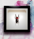 015_Beetle-Red-Head-Black-Horns_featured