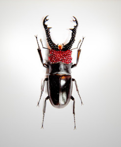 015_Beetle-Red-Head-Black-Horns_full