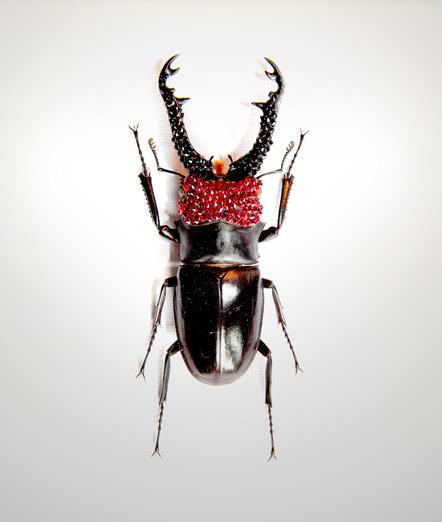 015_Beetle-Red-Head-Black-Horns_full