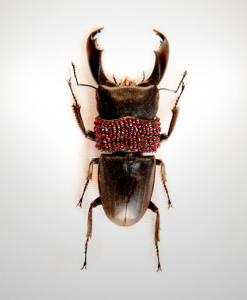 016_Beetle_Burgundy_full