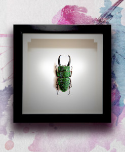 017_Beetle_HeadMidEnd_Green_featured