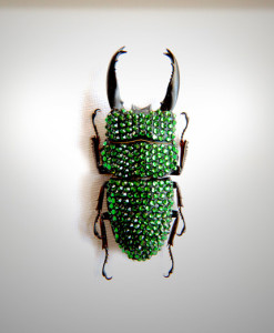 017_Beetle_HeadMidEnd_Green_full