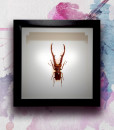 020_Beetle_Horns_featured
