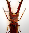 021_Beetle_close