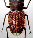 022_Beetle_close