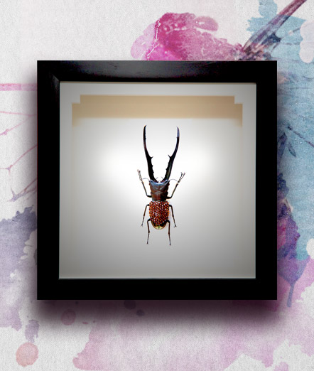 022_Beetle_featured
