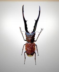 022_Beetle_full
