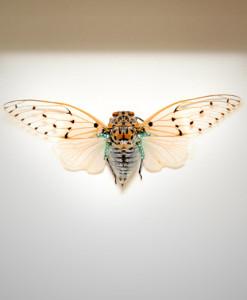 024_Ghost-Cicada-Framed_full