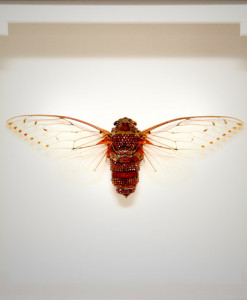 025_Cicada-Framed_full
