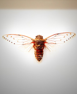 026_Cicada_full