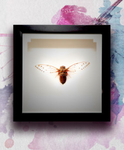 028_Cicada_featured