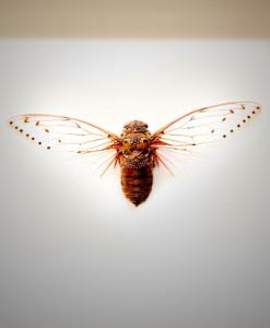 028_Cicada_full