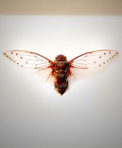 030_Cicada_full