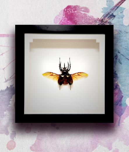 034_Atlas-Spread-Framed_featured