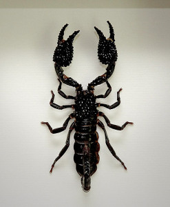 037_Scorpion_Black_Framed_full