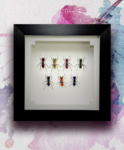 042_Ants_Rainbow_Framed_featured