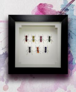 042_Ants_Rainbow_Framed_featured