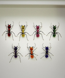 042_Ants_Rainbow_Framed_full
