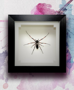 043_Spider_Framed_featured