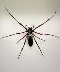 043_Spider_Framed_full