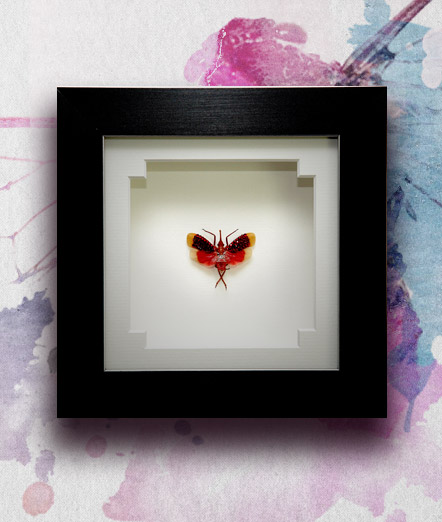 046_Lantern-Beetle_Red_Framed_featured