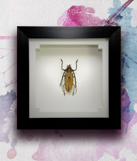 047_Longhorn_Framed_featured