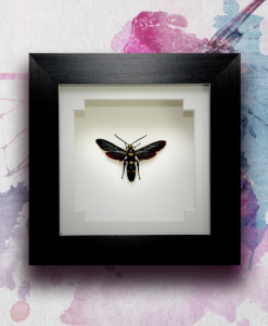 049_Wasp_Framed_featured