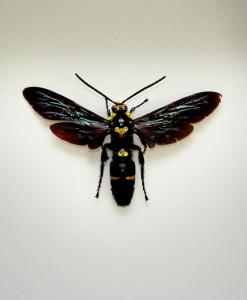 049_Wasp_Framed_full