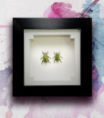 050_Gold-Scarab-Beetles_Framed_featured