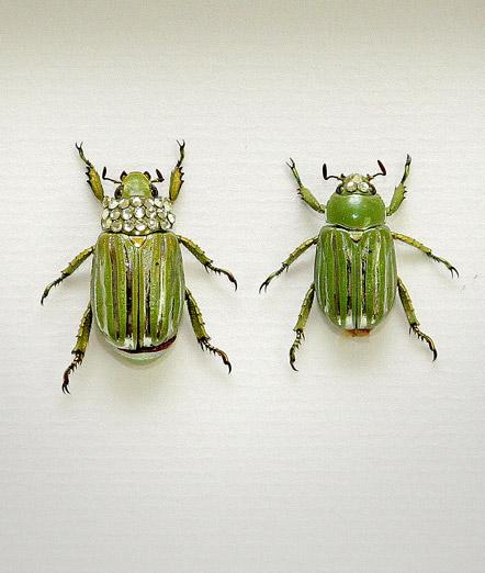 050_Gold-Scarab-Beetles_Framed_full