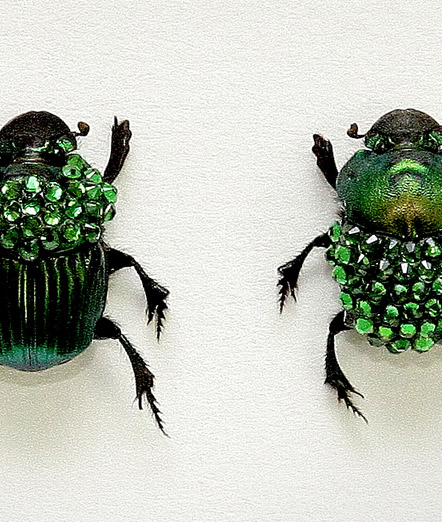 051_Green-Scarab-Beetles_Framed_close