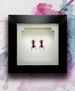 053_Ants_Red_FramedFEAtURED