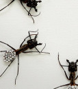054_Ants_DISCO_Framed_CLOSE