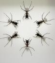 054_Ants_DISCO_Framed_fULL
